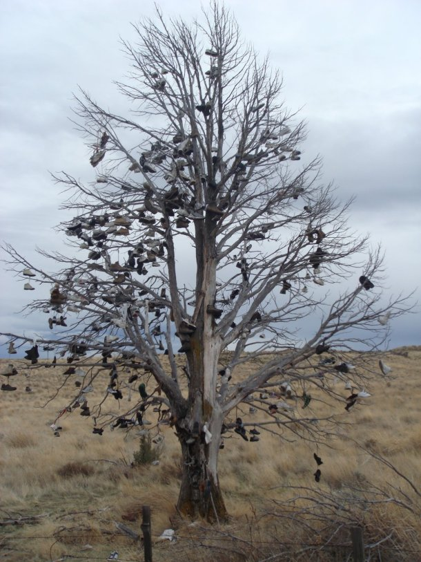 shoe-tree-along-highway