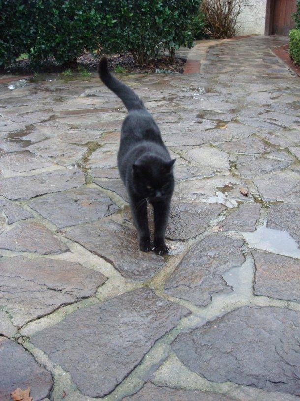 V-Sattui-Winery-cat