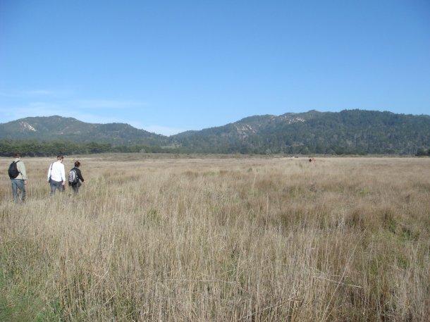 Ano-Nuevo-State-Park