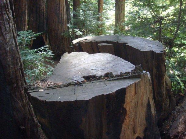 valley-view-Pfeiffer-Big-Sur-State-Park