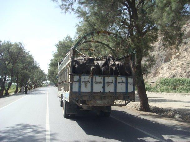a1-jalalabad-torkham-highway