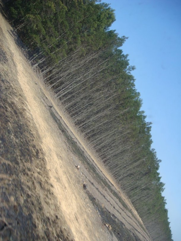 logging-south-africa (1)