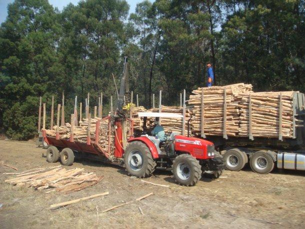 logging-south-africa (2)