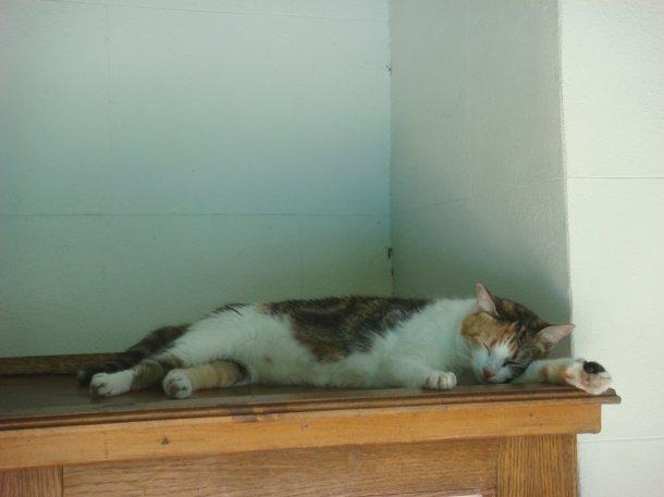 cat-Hemingway-Home-Museum
