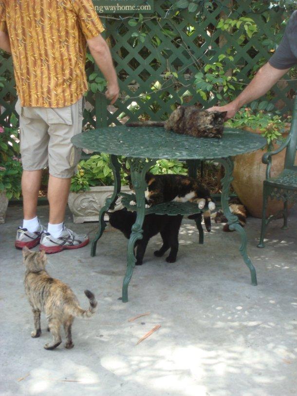 hemingway-home-museum-cats