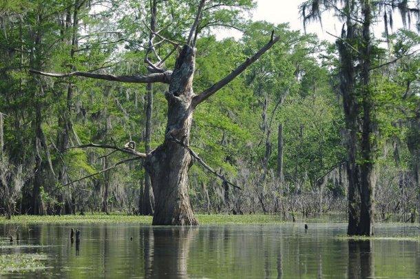 Louisiana-bayou