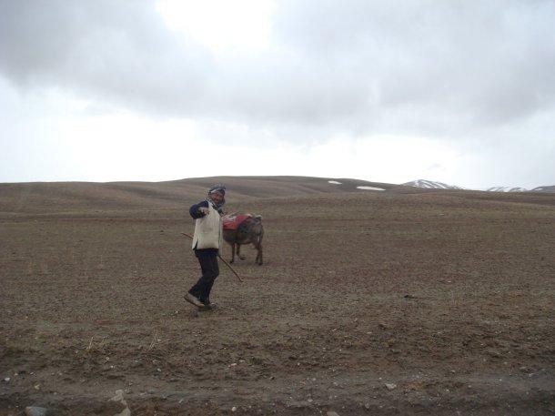 afghan-shepherd