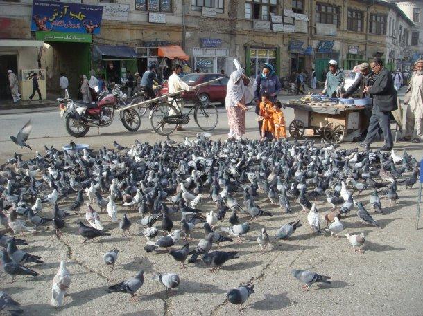 pigeons-kabul-afghanistan