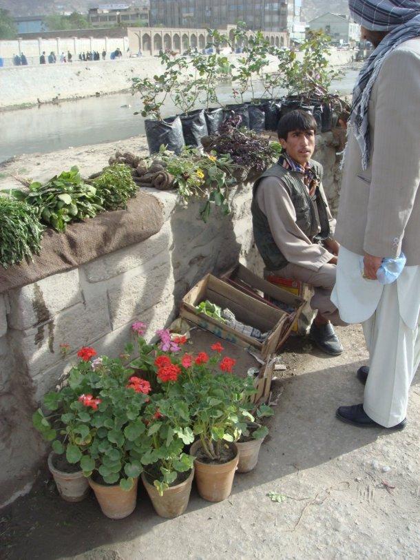 selling-plants-kabul-river