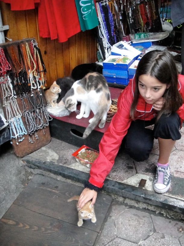 little-girl-petting-kitten-istanbul