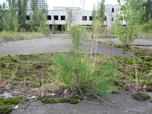 pripyat market