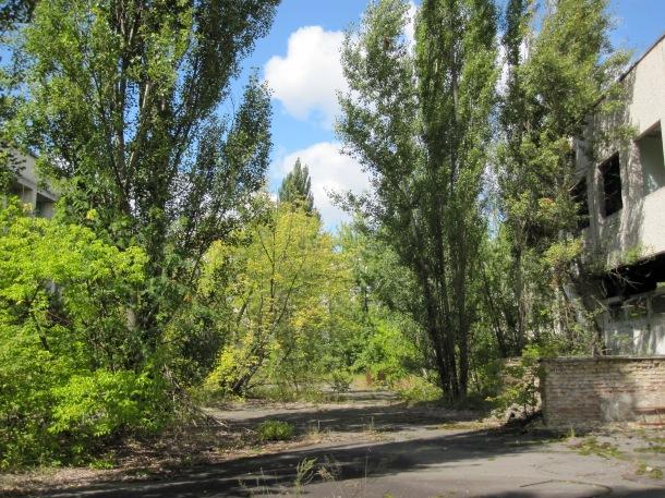 pripyat-nature