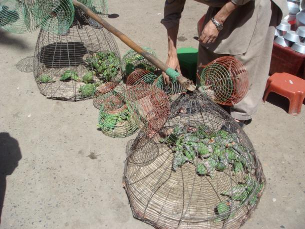 bird-market-peshawar