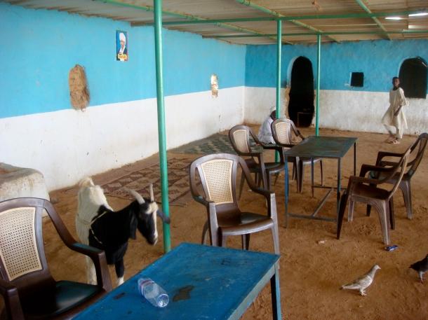 goat-in-restaurant-sudan