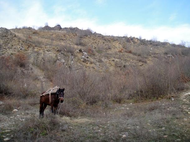 horse-albania