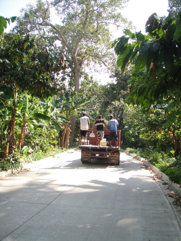 Chuao-banana-plantation