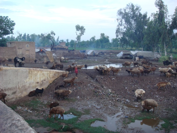 gypsy-camp-pakistan
