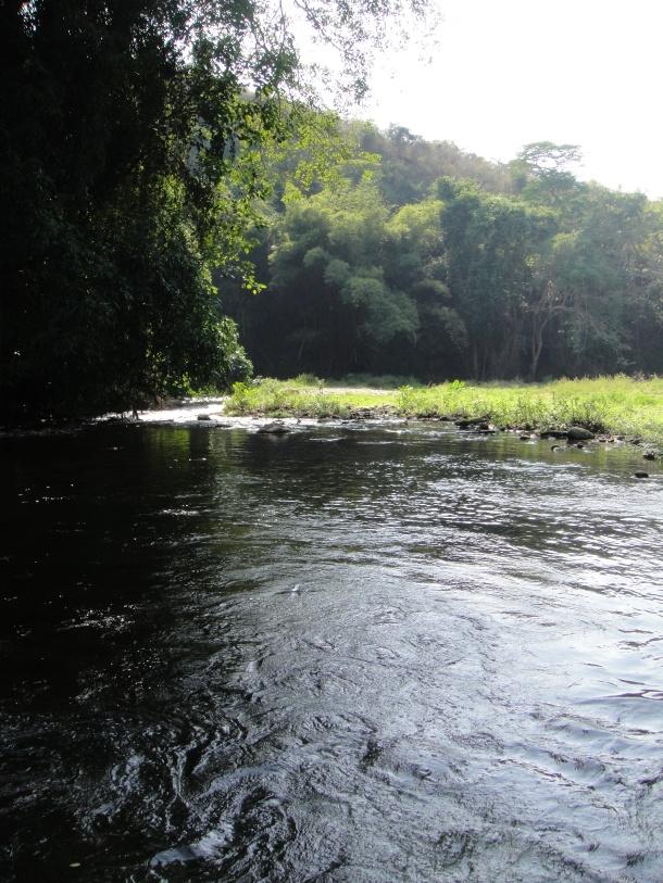 venezuela-jungle