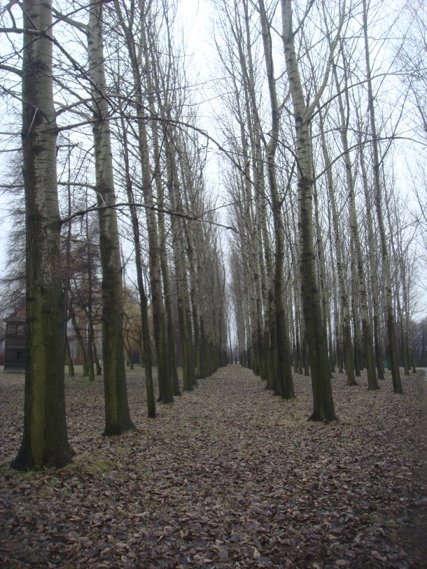 Trees in Birkenau