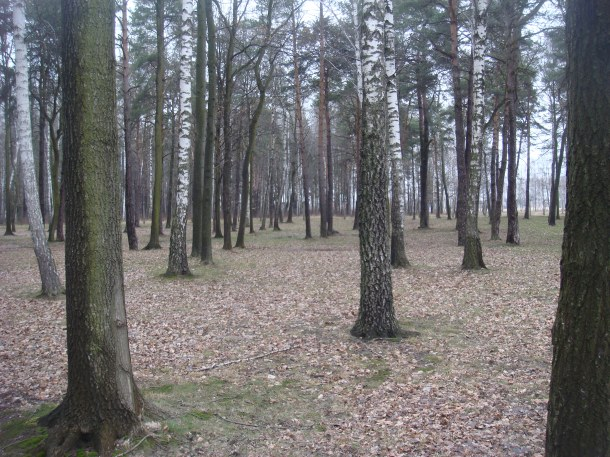 Woods where victims waited to be gassed or shot in Birkenau