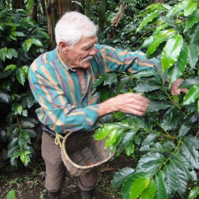 Don Elias And His Colombian Coffee Plantation