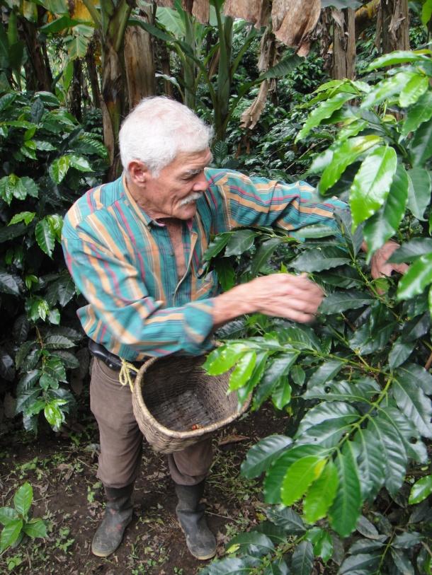 Don Elias and his coffee plantation in Salento, Colombia
