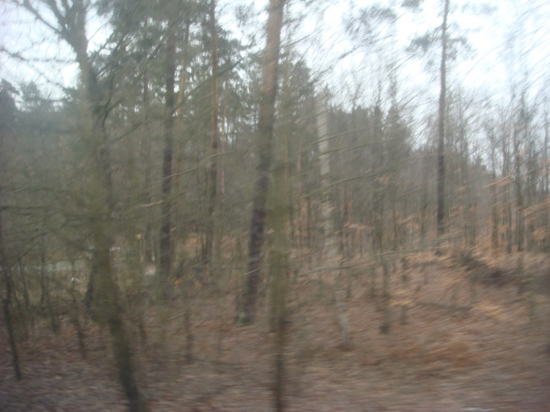 The forest around Auschwitz death camp