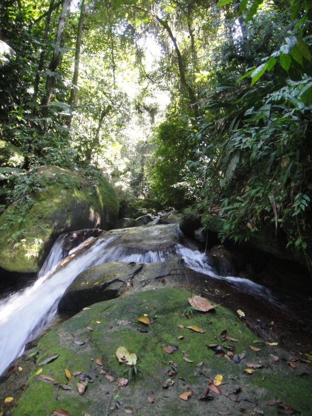 Henri Pittier National Park, Venezuela