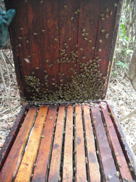 Panels inside a killer bee hive