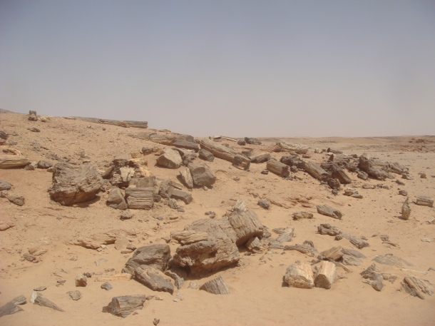petrified forest sudan