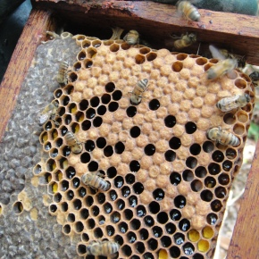 Bruno's Bees: His Killer Bees…