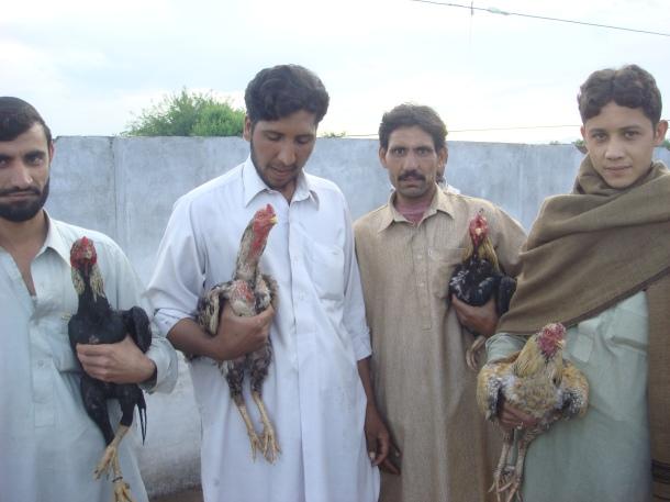 bird fighting pakistan