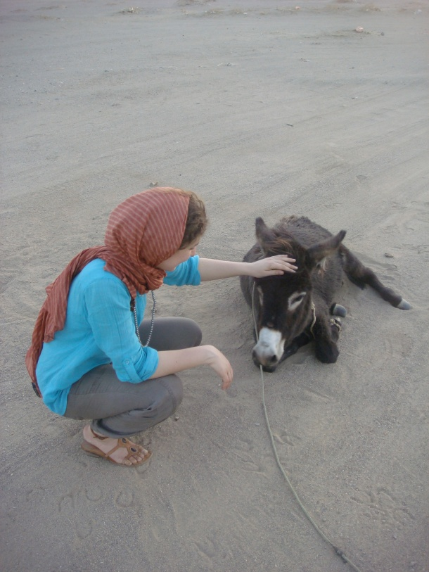 donkey-sudan