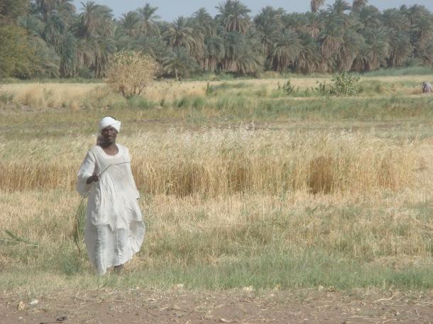 farmer-sudan