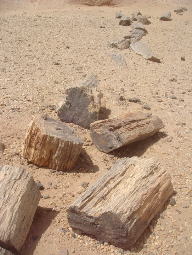 petrified-forest-sudan