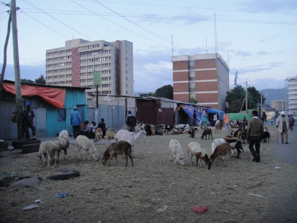 Livestock market in Addis Ababa