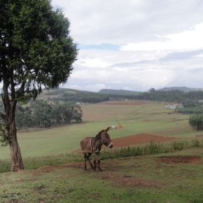 The Entoto Mountains And The Tree Plantations Of Ethiopia