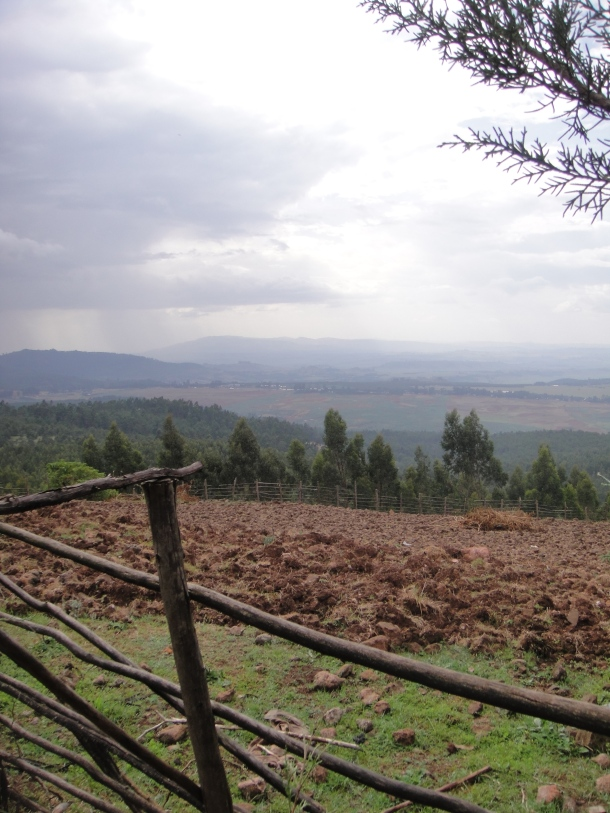 Ethiopian tree plantations