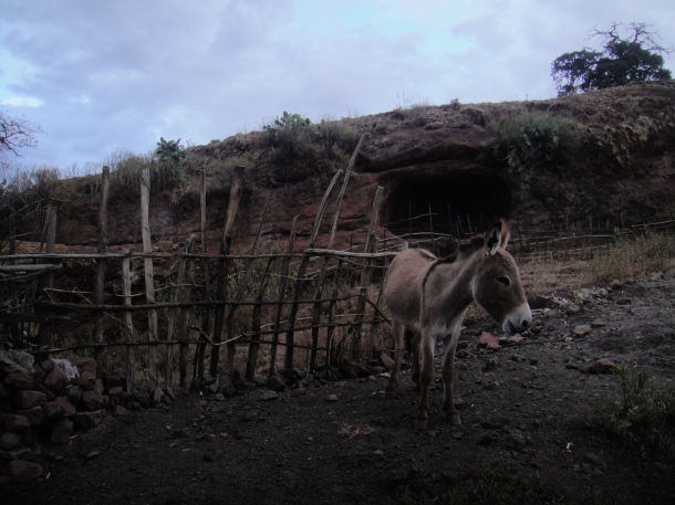 donkey with cave behind in Lalibela