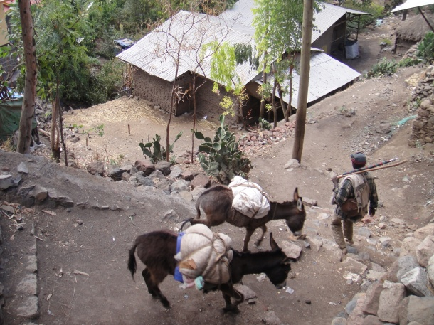 donkeys in Lalibela