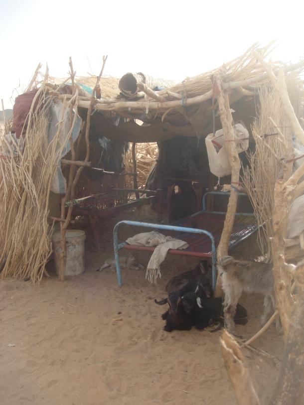 nomadic-herders