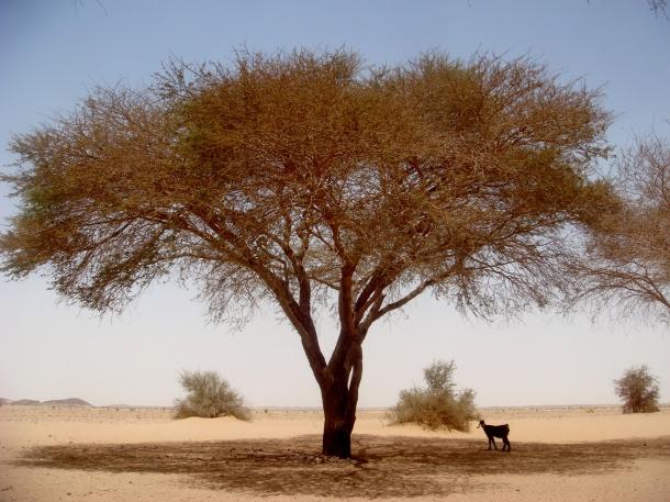 nomads-bayuda-desert-sudan