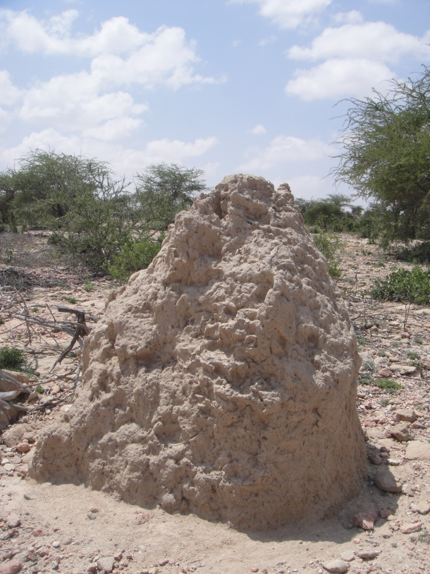 Termite mound in Somalia