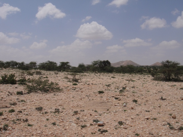 Somalia wildlands