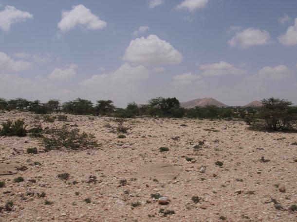 Somalia wildlands