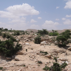 The Wildlands of Somalia