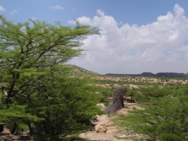 Somali wildlands - as green as it gets