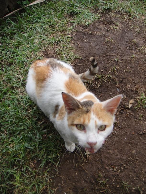 Taitu Hotel cat