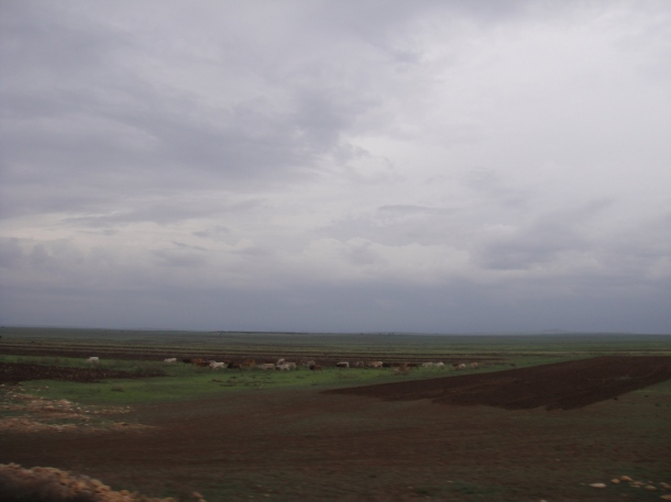 Fields surrounding Jijiga