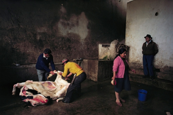 William Albert Allard, Woman in Pink Sweater, Slaughterhouse, Huancayo, 1981